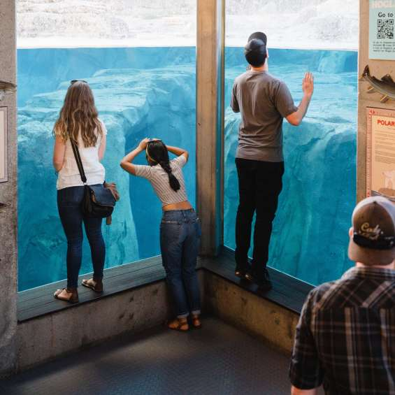 Peering Through Aquarium at Utah's Hogle Zoo Brew