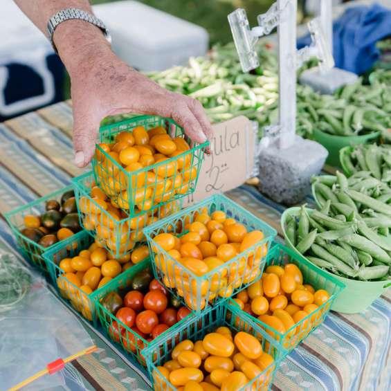 Vegetables at Wheeler Farm Farmers' Market