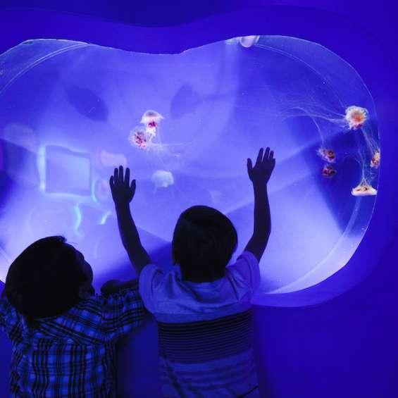 Jellyfish at the Loveland Living Aquarium