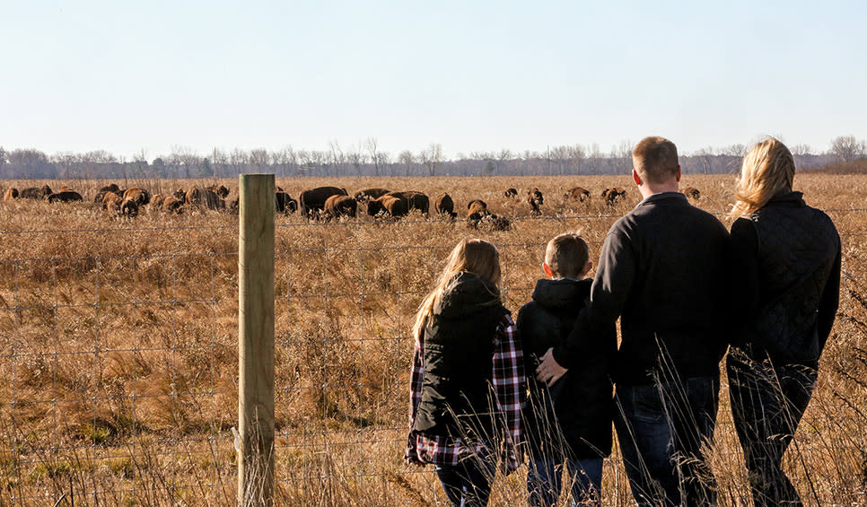 Bison viewing at Kankakee Sands