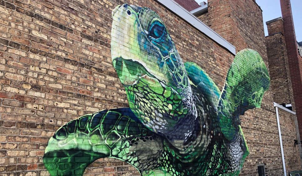 RenArtWlk Cameron Moberg: turtle