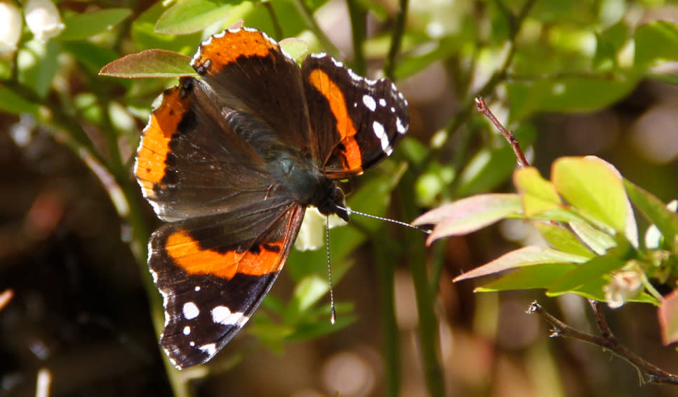 Cowles Bog Butterfly Spring