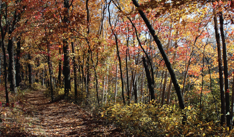 Autumn-colored trees along Cowles Bog Trail in the Fall