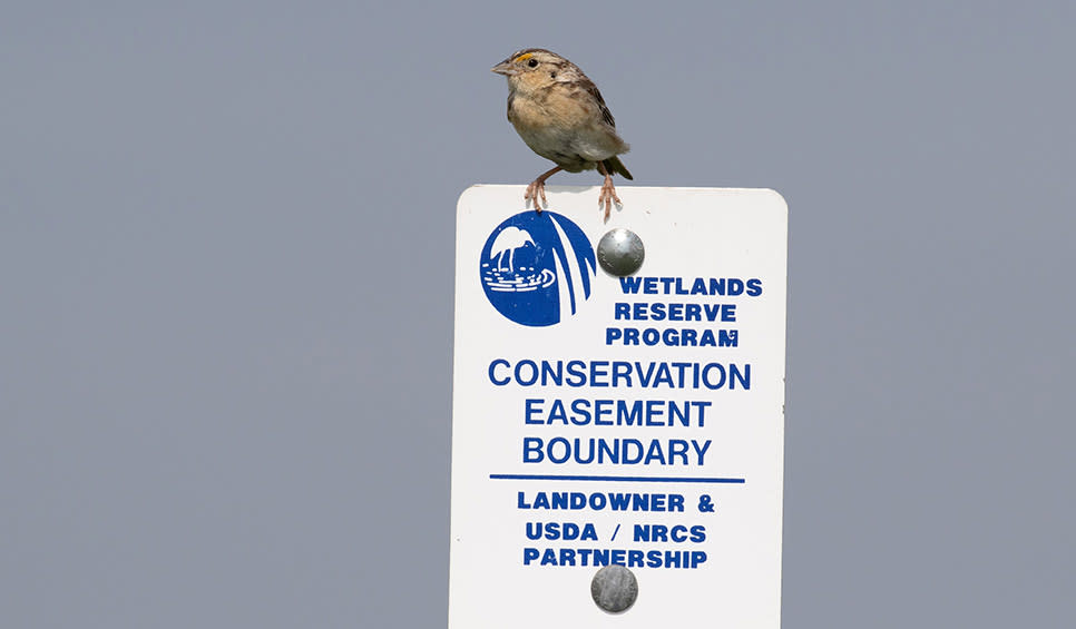 Grasshopper Sparrow on NRCS sign by Kathy Malone