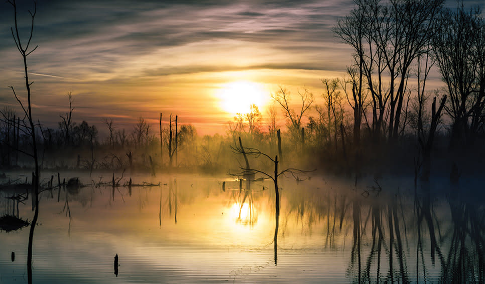 Great Marsh - fog by Rafi Wilkinson