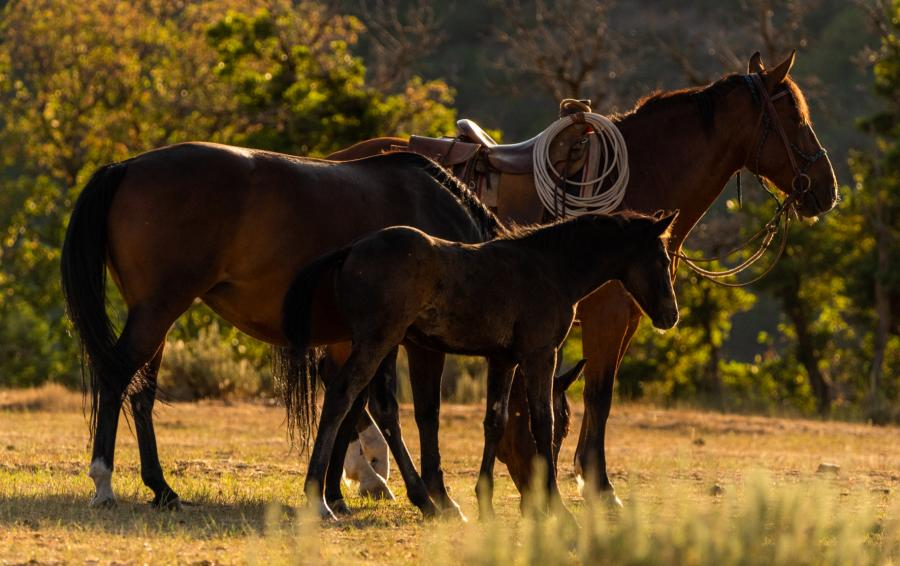 Hobble Creek Outfitters Baby Horse