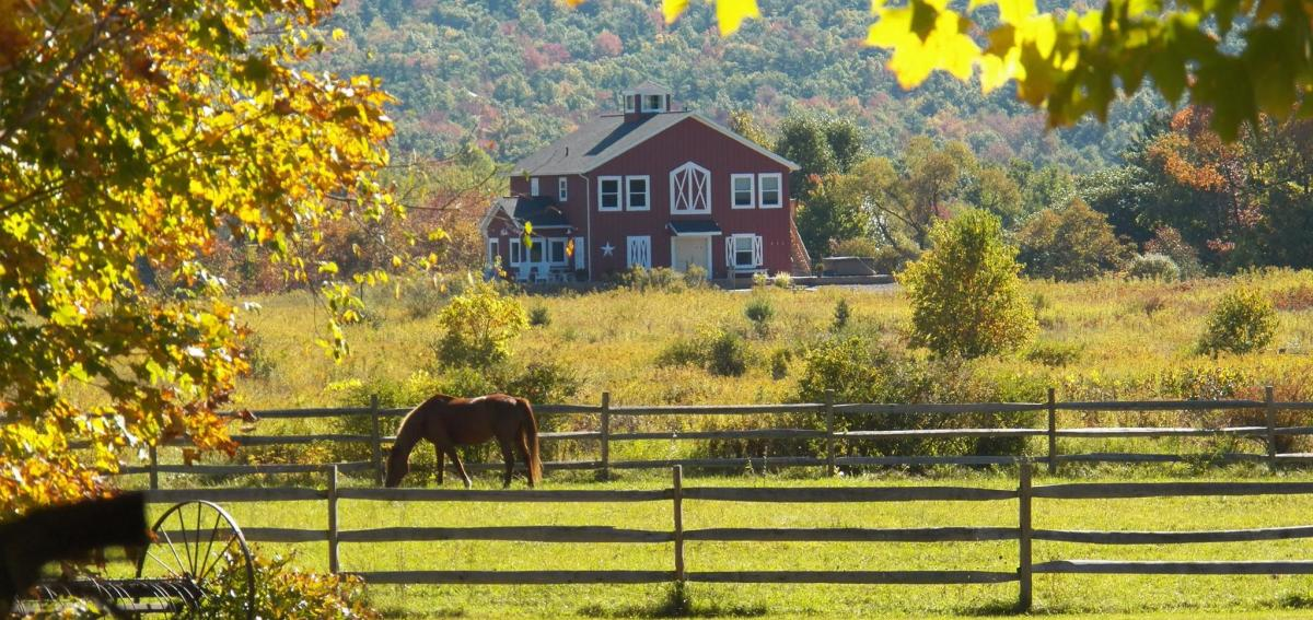 View from Mountain Horse Farm overlooking the pastures