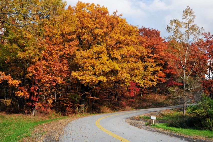 Autumn trees on a country road