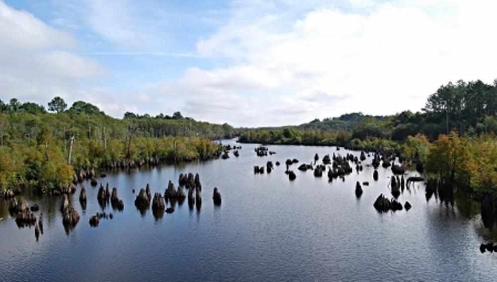 dead-lakes-wewahitchka.jpg