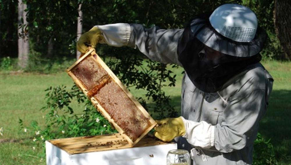 smiley-honey-hive-bee.jpg