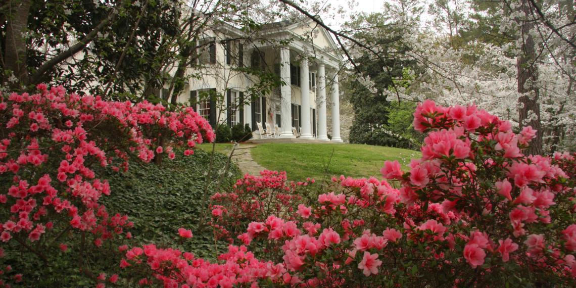 Fickling Home Cherry Blossom