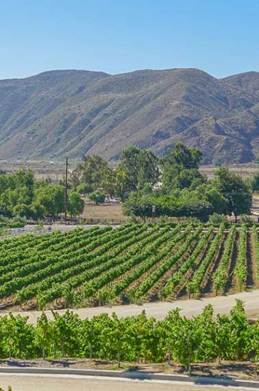 Top 10 Things To Do in Temecula Valley