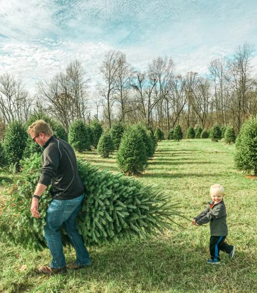 Man with child carrying Christmas tree at U-pick trees at Huber's Orchard, Winery & Vineyard.
