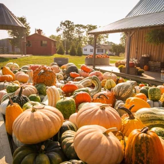 fowler pumpkin patch