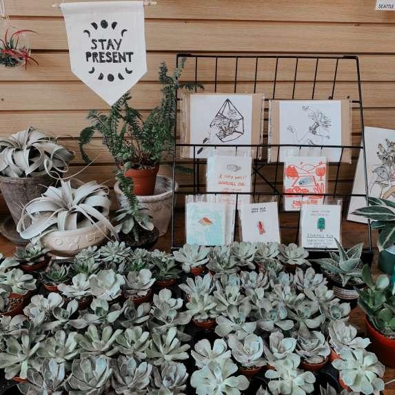 Mattea Linae Plants