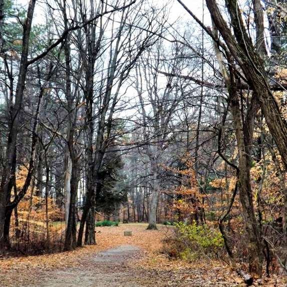Entrance to Stepp Cemetery at Morgan-Monroe State Forest