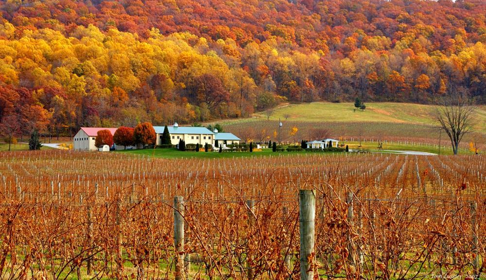 Fall foliage on display at a farm in Loudoun County