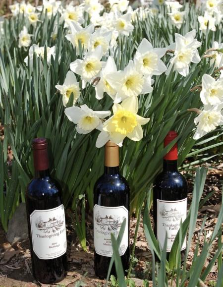 Spring daffodils in bloom and spring wine
