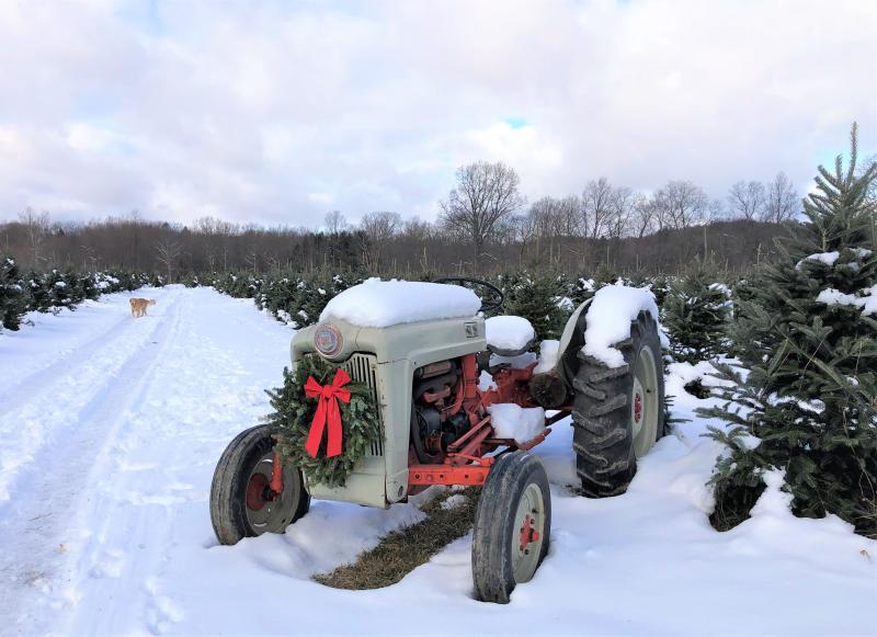VanDerZee Christmas Tree Farm