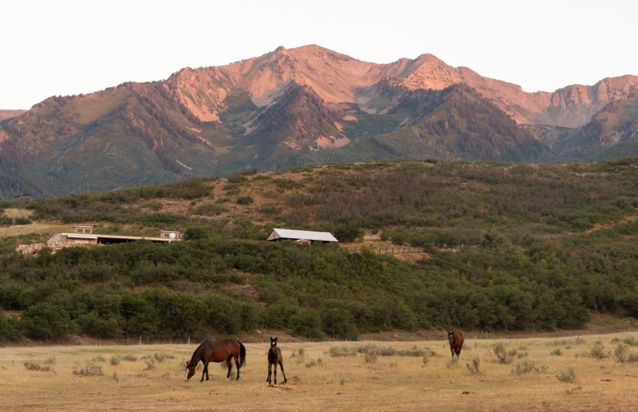 Horseback Riding at Hobble Creek Outfitters