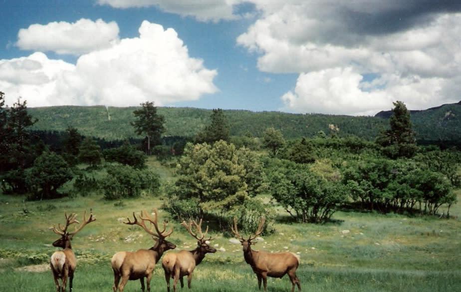 Chama Wildlife In New Mexico