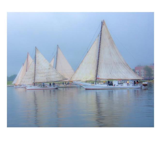 Photo of Cambridge, MD Skipjack sailboat race.