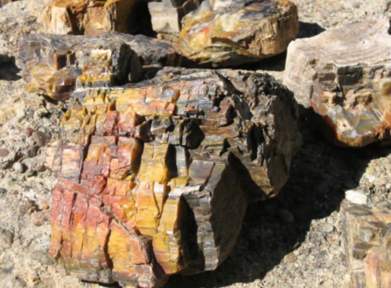 Fossils Escalante 2