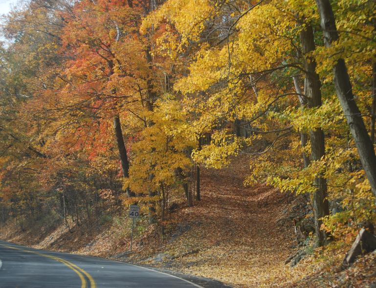 The road near Newville, PA winds through a forest of changing fall foliage.