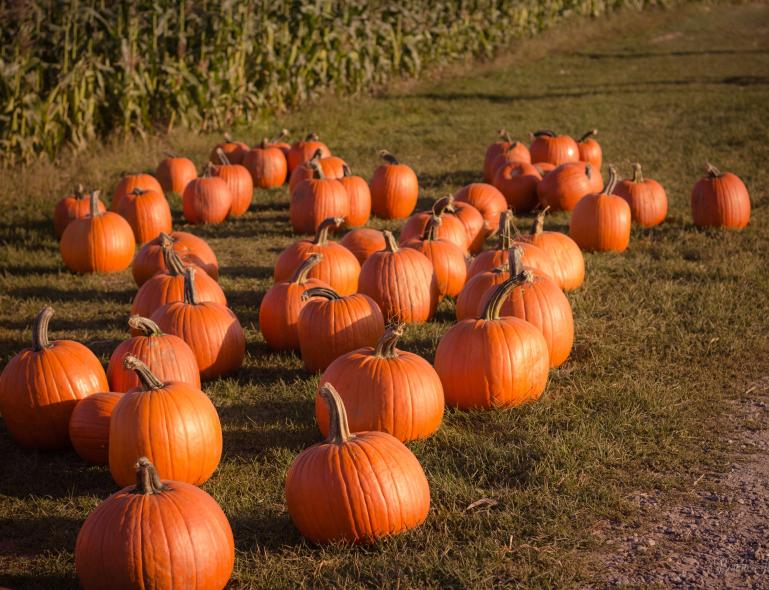 Generic Pumpkin Photo from Unsplash