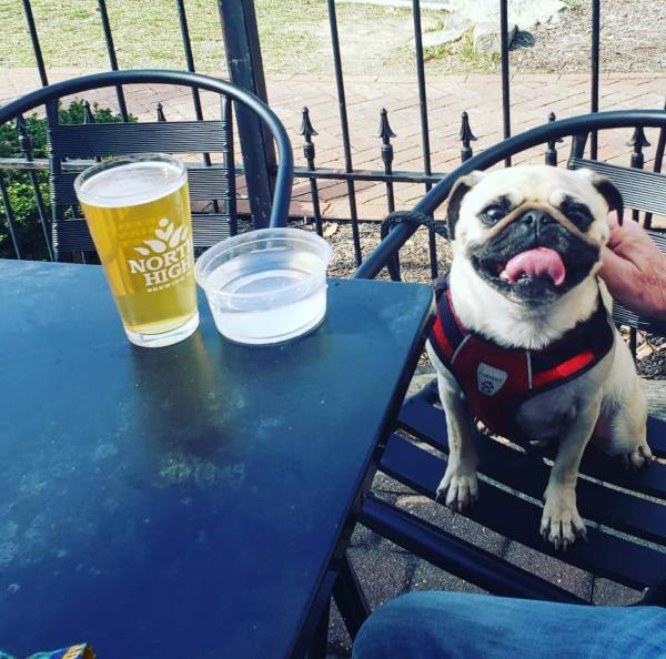 A pug sitting in a chair on the patio at North High Brewing