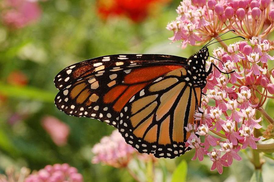 ABQ Butterflies 5