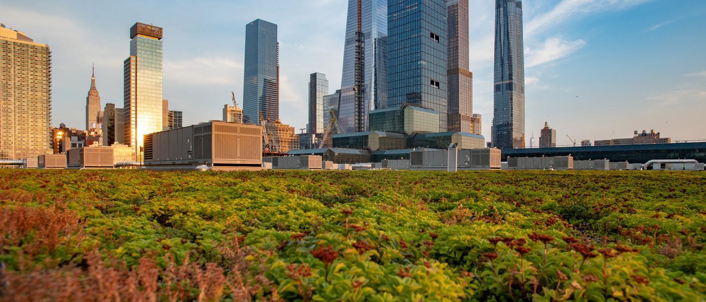 Javits Center Green Roof. Photo: Julienne Shaer