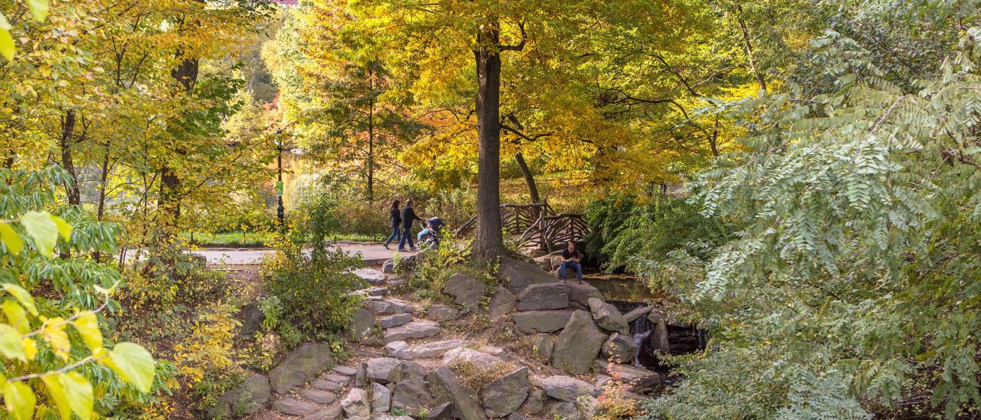 central park, fall