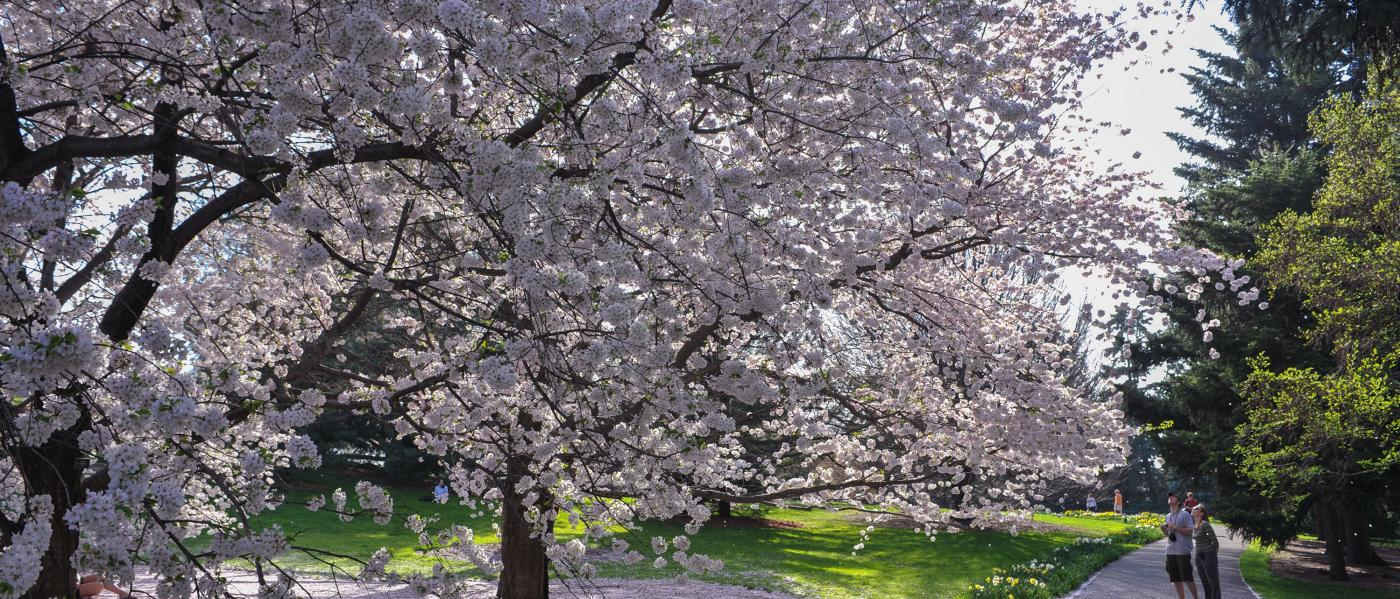 NYBG, spring
