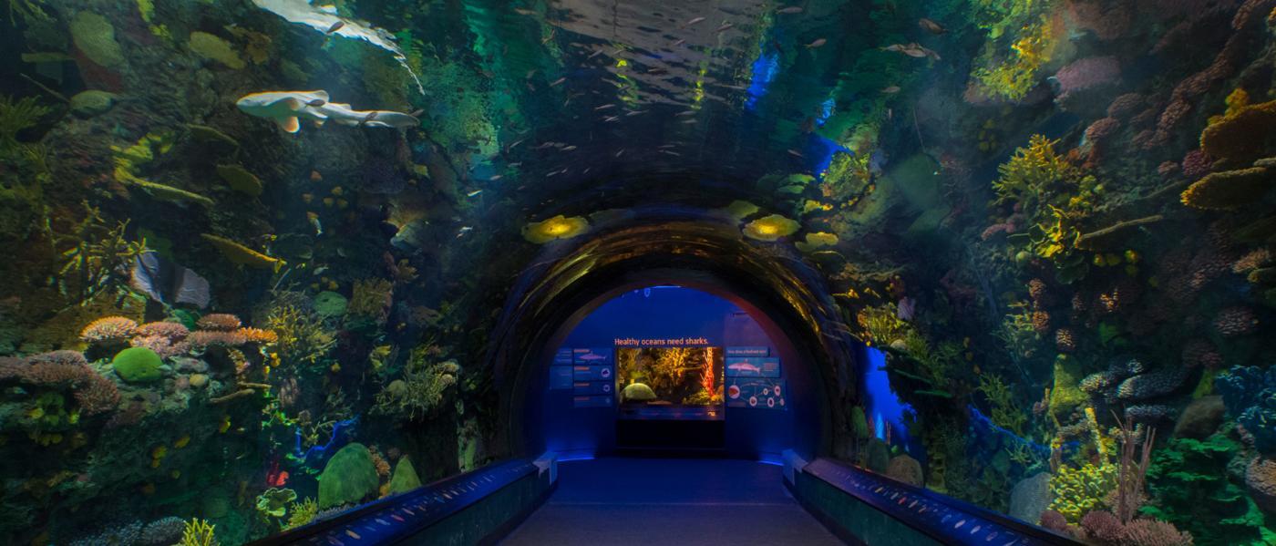 new york aquarium, interior