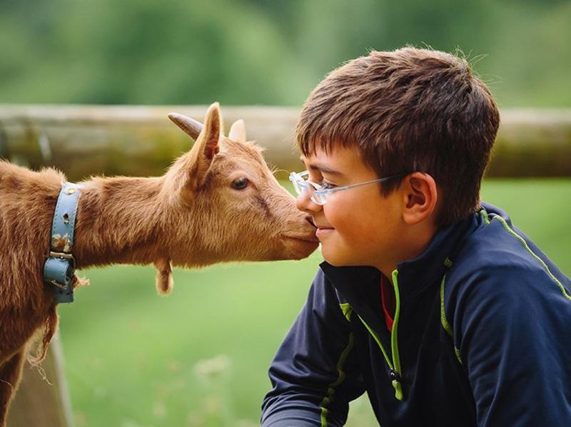 Goat kid and human kid