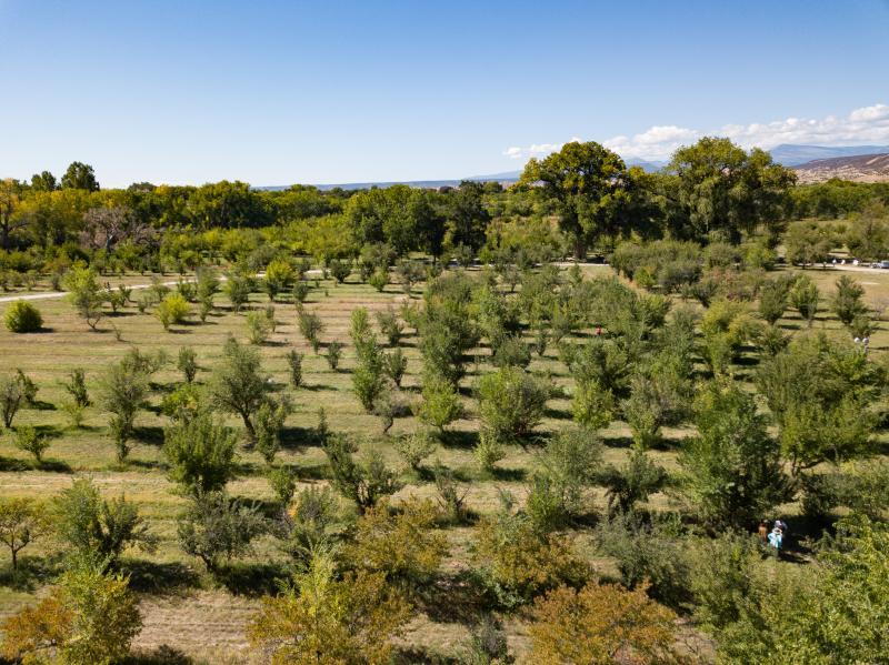 Los Luceros: Apple Orchard