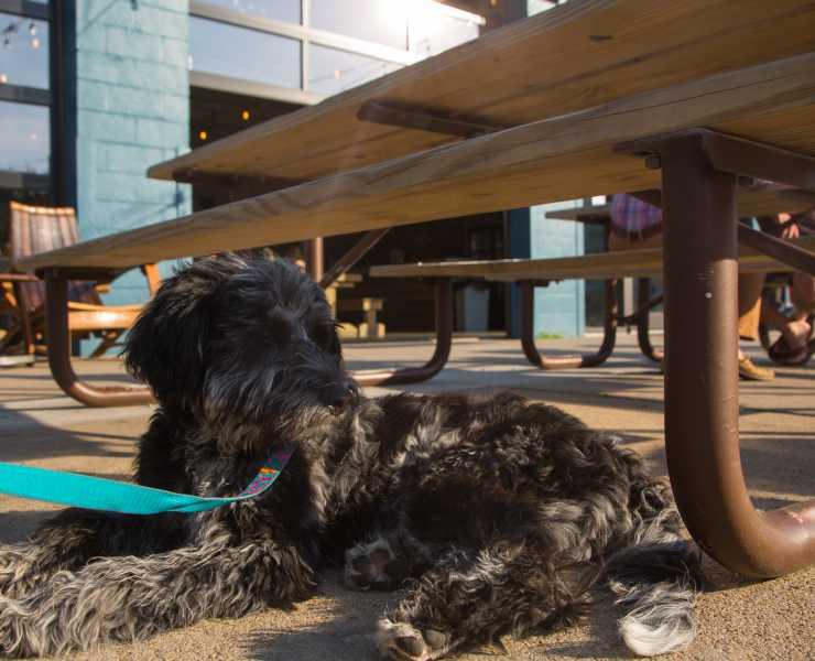 Pet-Friendly Virginia Beach | Travel With Your Four-Legged Friend