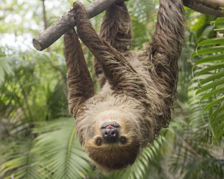 Hanging_around_sloth.jpg Faces of the Rainforest at Roger Williams Park Zoo