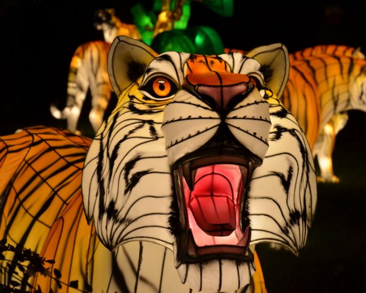 Illuminated tiger lantern.