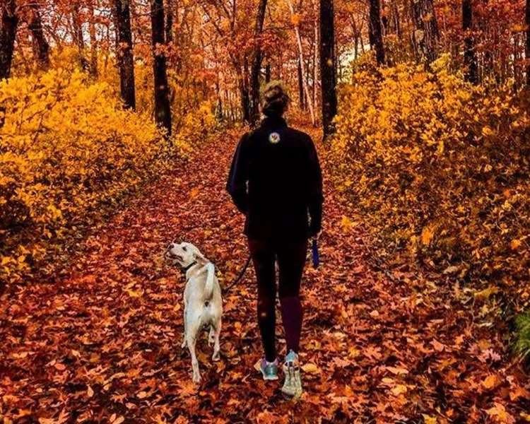 Person walking a dog in the woods during fall in Rhode Island