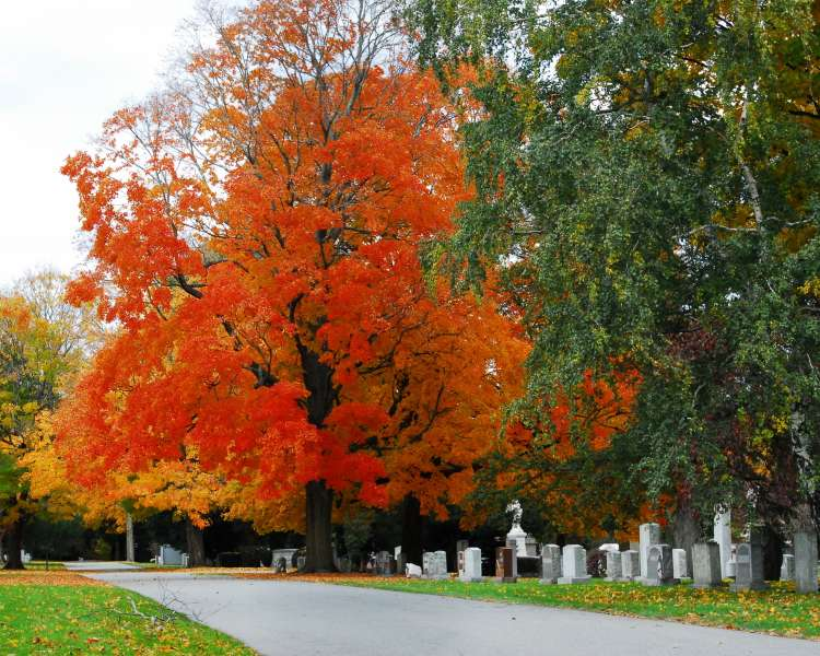 Flaming orange tree behind gravestones at Swan Point Cemetery in Providence.