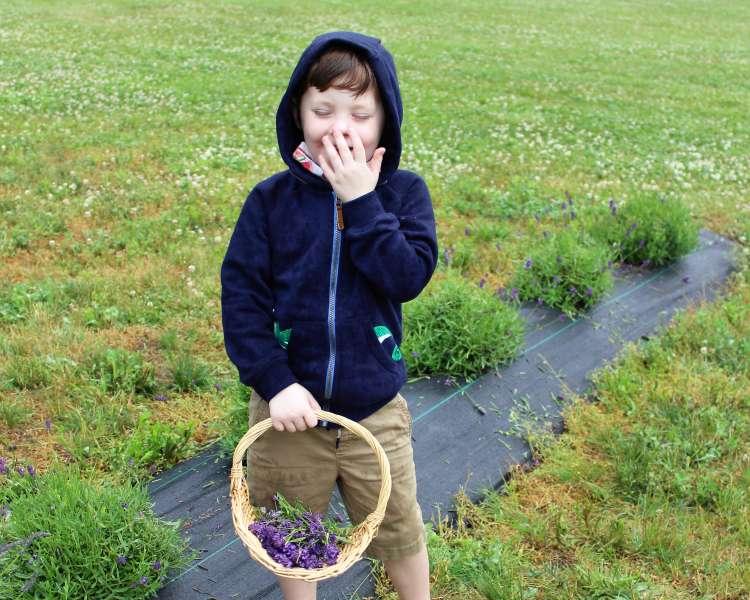 Picking lavender!
