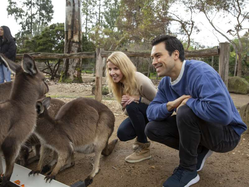 Close-up with Kangaroos at Melbourne Zoo, Melbourne Wildlife