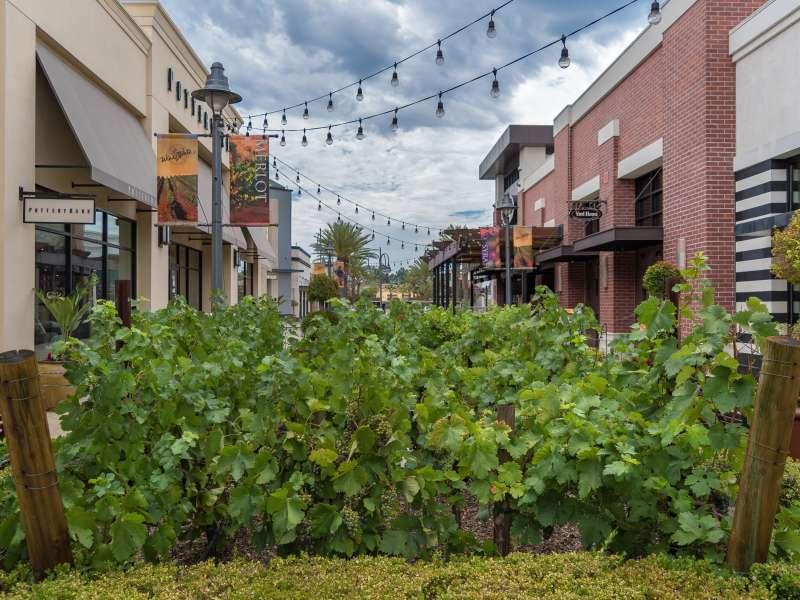 Promenade vineyard walk outside
