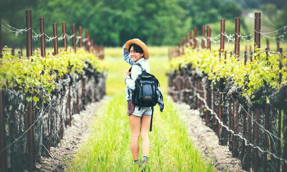 Walking in a Napa Valley Vineyard