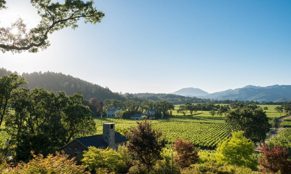 It's Easy Being Green in Napa Valley