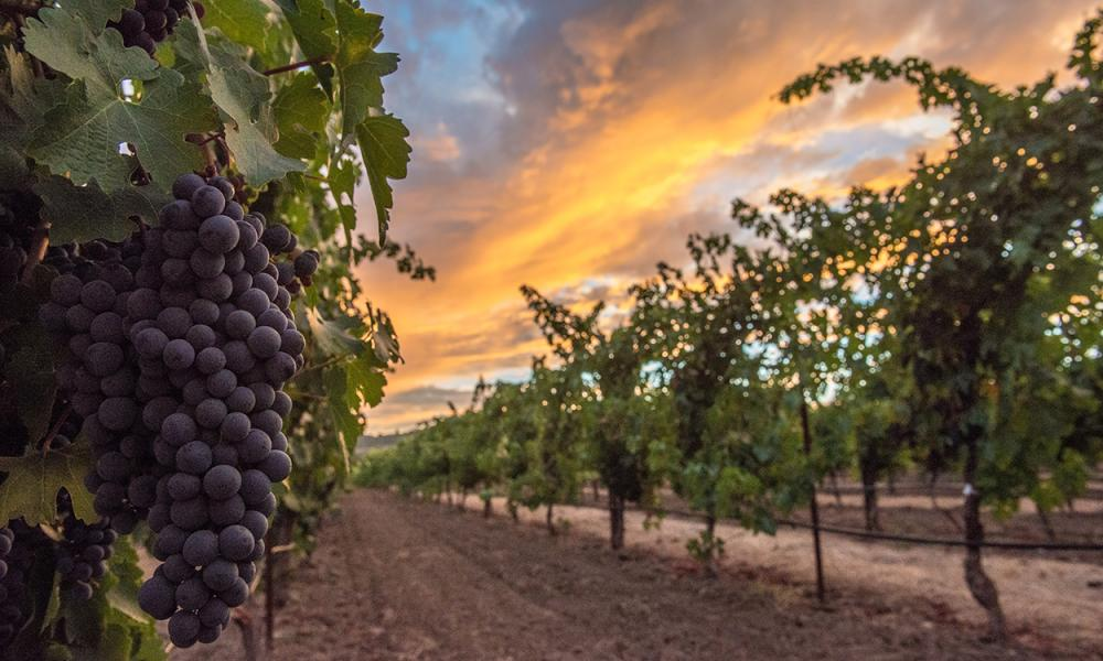 Do-It-Yourself Napa Valley Harvest: Grape Stomping & Wine Blending