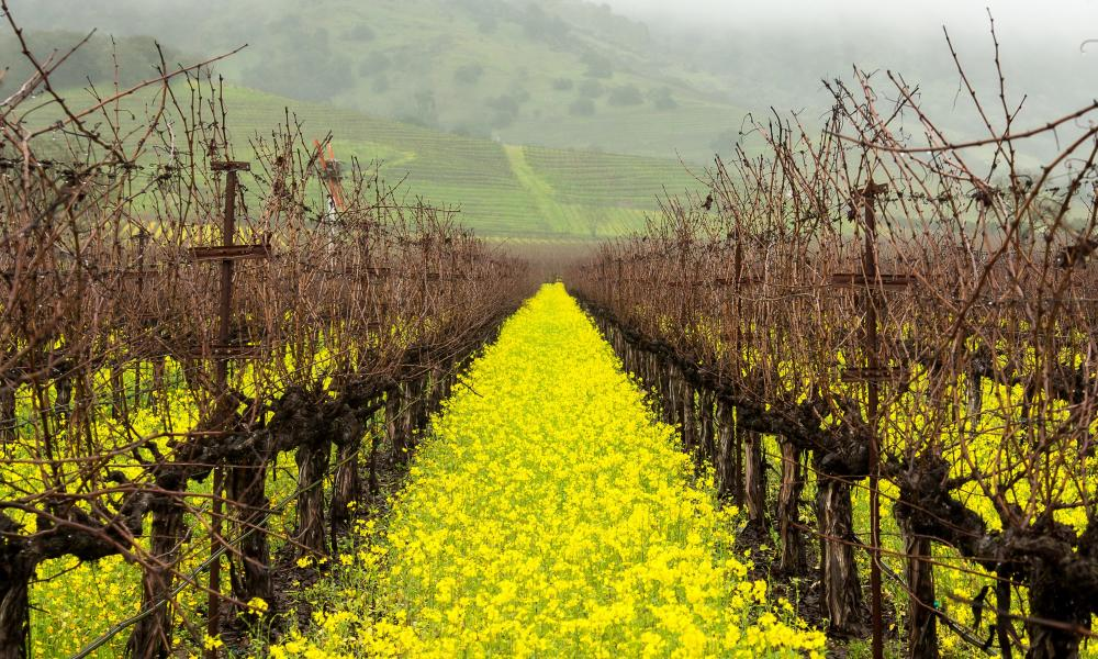 The Perfect Napa Valley Itinerary from StylishlyMe