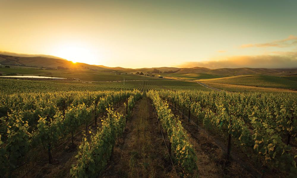 The sun setting over vineyards in Napa Valley